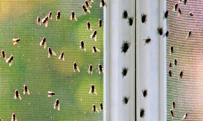 Elite Pest Solutions - Modesto: $49 for an Insect-Control Treatment from Elite Pest Solutions ($150 Value)