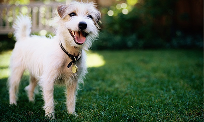 K9 Kountry - Rendon: Two, Five, or Seven Days of Dog Boarding, or Four-Week Obedience Course at K9 Kountry in Burleson (Up to 58% Off)