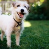 Up to 58% Off Dog-Care Services in Burleson
