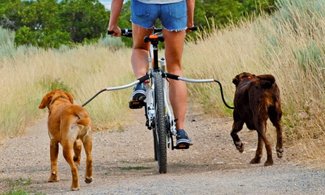 Supporto da guinzaglio per bicicletta