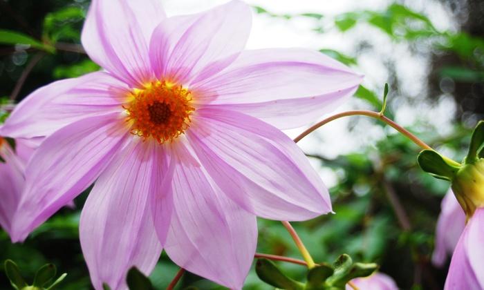 Kanapaha Botanical Gardens - Gainesville: Up to 51% Off Annual Membership  at Kanapaha Botanical Gardens