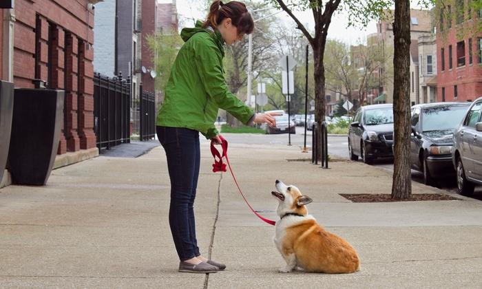 NYC Pet Nannies - New York City: Five Dog Walks or One Month of Dog Walking from NYC Pet Nannies (Up to 58% Off)