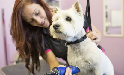 Dog or Cat Grooming Package at Africano Animals (Up to 53% Off)
