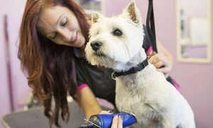 The Doggy Den: Dog Grooming from £15 at The Doggy Den (50% Off)