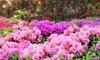 1, 2 o 3 plantas de exterior rhododendron