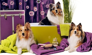 Pet Village: Choice of Pet Grooming Service at Pet Village (Up to 51% Off)