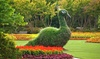Dallas Arboretum and Botanical Garden  - Dallas Arboretum: $15 for a Summer at the Arboretum Visit for Two at Dallas Arboretum and Botanical Garden ($30 Value)