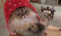 【最大41%OFF】可愛い猫たちと触れあって、つかの間の癒しタイムを≪平日限定/猫カフェ+ソフトドリンク飲み放題/60分 or 90分≫...