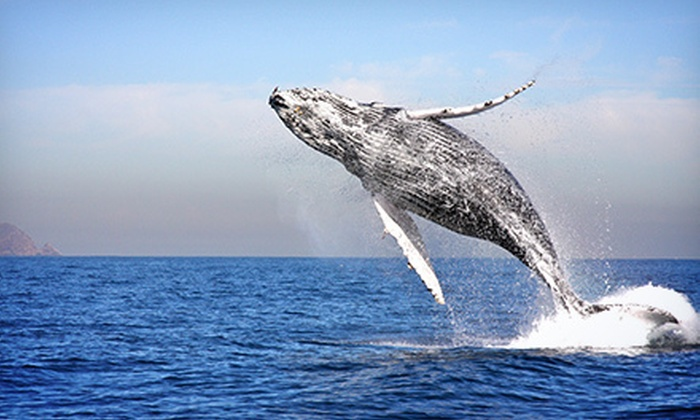 Channel Islands Whale Watching - Oxnard: Three-Hour Whale-Watching Cruise for One or Two from Channel Islands Whale Watching (Up to 56% Off)