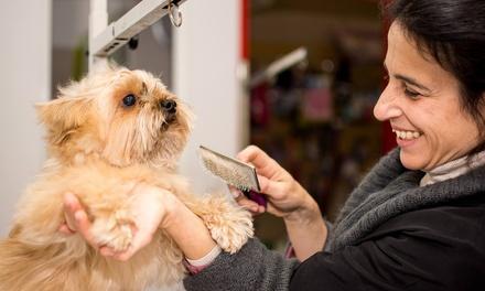 Sesión de peluquería para perro de hasta más de más de 25 kg o gato desde 9,95 € en Don Perro