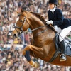 $7.50 for Equestrian Show-Jumping Event