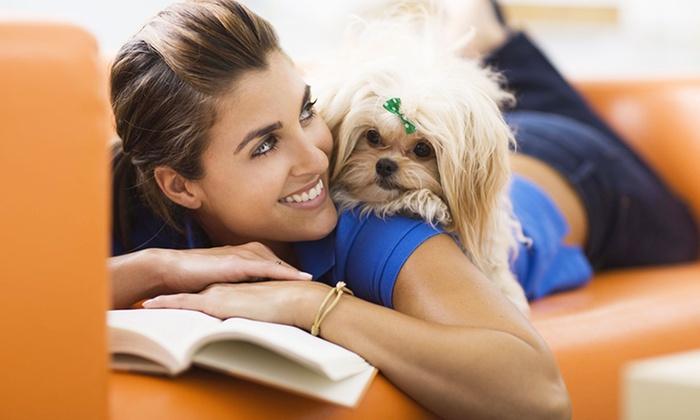 Holly and Hugo: Cours en ligne anglophone de psychologie animale, tout sur votre chien ou votre chat dès 19€