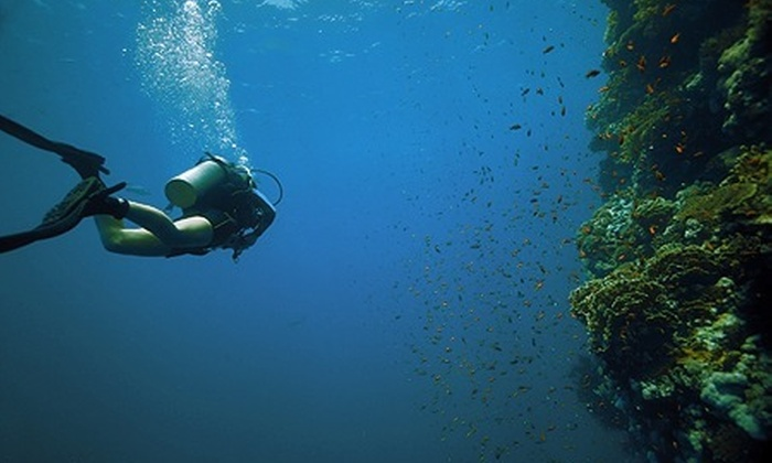 Arte Natação - Arte Natação: Arte Natação – Alto da Lapa: curso de mergulho com batismo em Ilhabela (opção de hospedagem), a partir de R$ 429