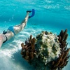 Up to 52%  Off Scuba or Snorkeling Courses