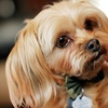 77% Off Pet Photography Package