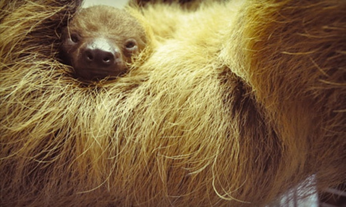 Pet Safari - Weathersfield: Exotic-Animal Encounter for One, Two, or Four at Pet Safari in Dunedin (Up to 69% Off)