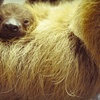 Up to 69% Off Exotic-Animal Encounter in Dunedin