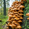 Identify Wild Edibles on a Walk with a Mushroom-Foraging Expert