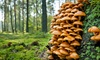 Learn About Foraging - Jenner Sea Store: Identify Wild Edibles on a Walk with a Mushroom-Foraging Expert