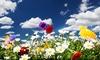 Grow Wild Organic-Wildflower Kit: Grow Wild Organic-Wildflower Kit