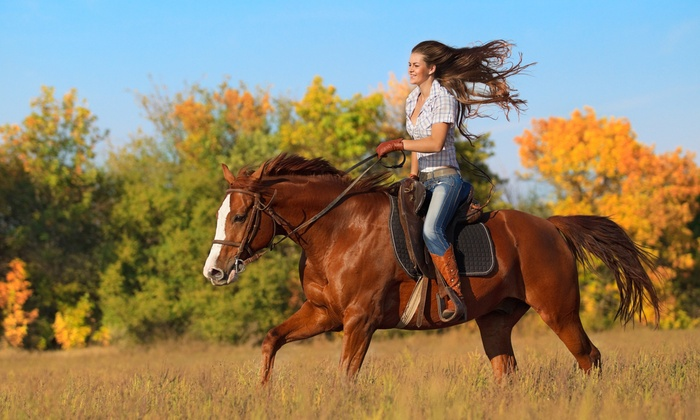 Sunnyside Stables - Rosemount: 90-Minute Horseback Trail Ride for One, Two, or Four at Sunnyside Stables (Up to 42% Off)