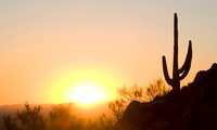 Desert Safari for Up to Six with Pick-Up and Drop-Off at a Choice of Location by Sea View Tourism (Up to 58% Off)