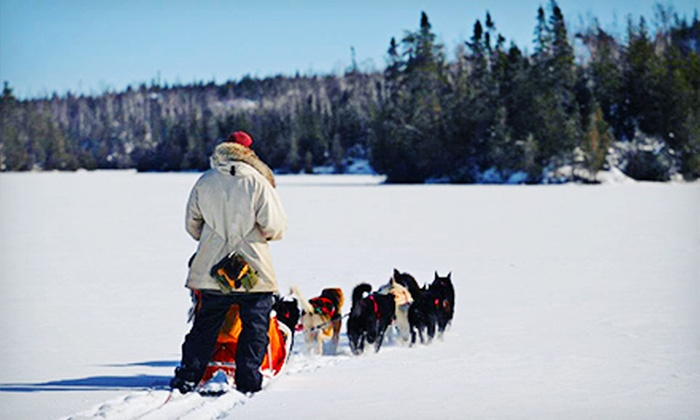 White Wilderness Sled Dog Adventures - White Wilderness Sled Dog Adventures: $125 for a Traditional Dogsledding Day Trip from White Wilderness Sled Dog Adventures (Up to $245 Value)