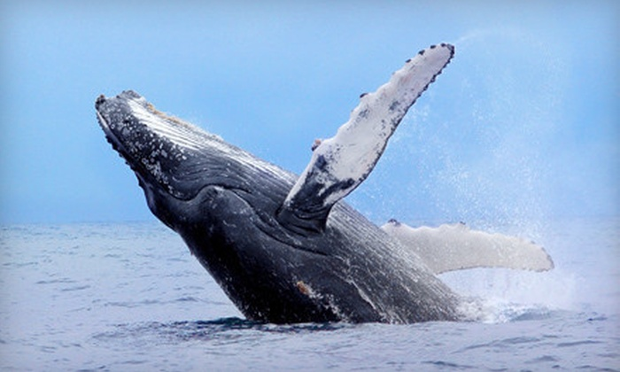Pacific Nature Tours - Mission Bay Park: 8-Hour Whale-Watching and Nature Tour for 1, 2, or 4 with Meals from Pacific Nature Tours (Up to 74% Off)
