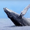 Up to 74% Off Whale-Watching and Coronado Islands Nature Tour