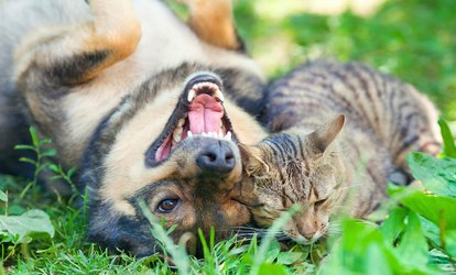 Dog or Cat <strong>Pet</strong> Services at Paddock Park Animal Care Center (Up to 49% Off)