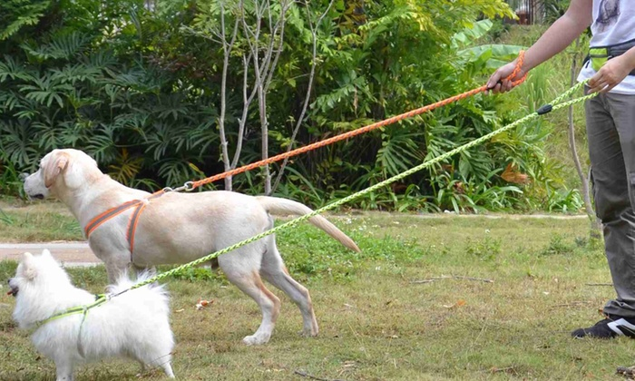 Reflective Dog Leash and Harness   Groupon Goods