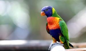 Papugarnia Rio: Bilet wstępu do Papugarni Rio: 2 bilety ulgowe (14,99 zł), 2 bilety normalne (18,99 zł) i więcej opcji
