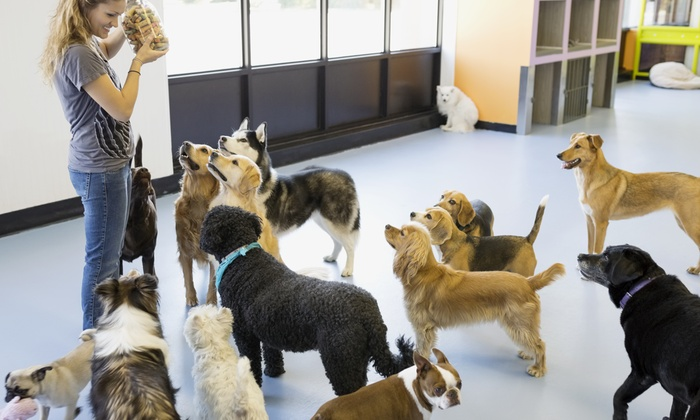 Auntie Dee's Treats & Daycare - Schenley: Three Days of Cage-Free Pet Boarding at Auntie Dee's Treats & Daycare (47% Off)
