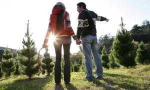 KiRa Weihnachtsbäume: Erlebnistag mitWeihnachtsbaum selber schlagen inkl. Glühwein und Punsch für Vier von KiRa Weihnachtsbäume (50% sparen*)