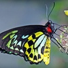 Half Off at The Butterfly Place