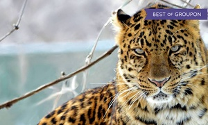Jungle Cat World: Entry for One, Single-Day Family Pass, or Yearly Pass for One or Family to Jungle Cat World (Up to 52% Off)