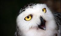 Two-Hour Owl Experience for One or Two at The North Somerset Bird Of Prey Centre (Up to 68% Off)