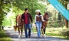 Young's Paso Fino Ranch, Inc - Reddick-McIntosh: $48 for a One-Hour Horseback Trail Ride for Two at Young's Paso Fino Ranch ($96 Value)