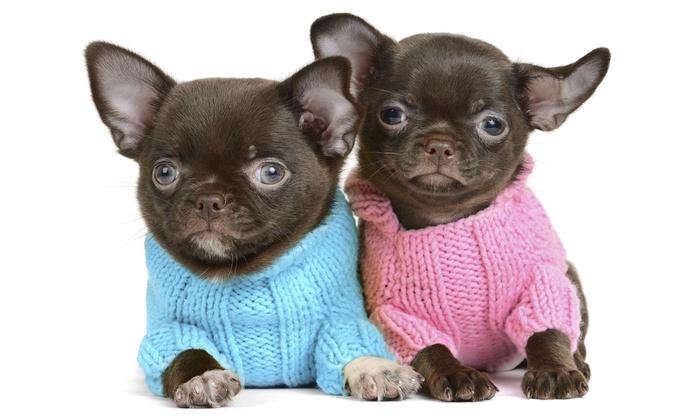 Posh Puppy Boutique - Rocklin: $10 for $20 Worth of Pet Apparel — Posh Puppy Boutique