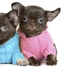50% Off Pet Apparel