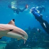 Up to 51% Off In-Water Shark Tour or Spearfishing in La Jolla