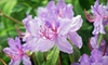 Rhododendron Species Foundation & Botanical Garden - Lakeland North: Visit for Two or Four or One-Year Family Membership to Rhododendron Species Foundation & Botanical Garden (50% Off)