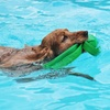 Up to 53% Off Rehabilitative Swims for Dogs