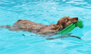 Canine Physical Rehab: One or Two 15-Minute Swims or One 30-Minute Swim at See Spot Swim in Canine Physical Rehab (Up to 53% Off)