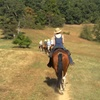 Up to 54% Off Half-Day Horseback Trail-Ride