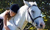 Family Horse Ranch & Rescue inc. - Green Cove Springs: One or Three 60-Minute Private Horseback-Riding Lessons at Family Horse Ranch & Rescue (Up to 53% Off)