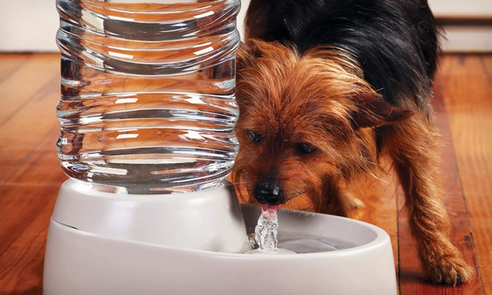 Pet Water Fountain: Etna Products Pet Water Fountain.