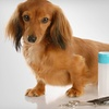 Up to 57% Off Dog Grooming