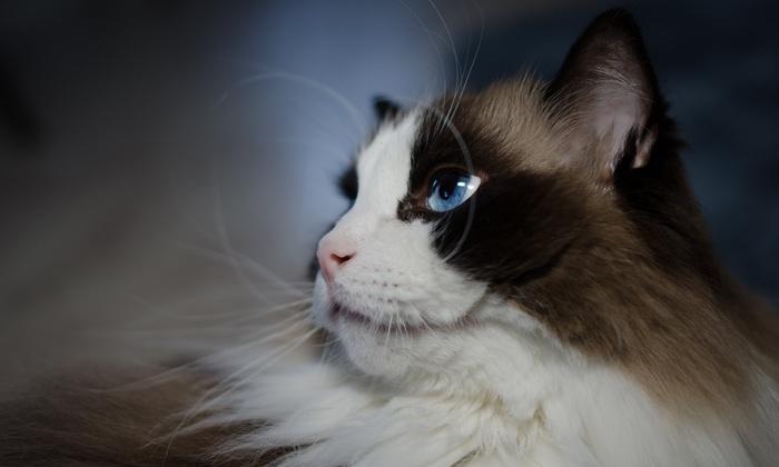 Alexandra Yackel Pet Photography - San Antonio: $24 for $60 Groupon — Alexandra Yackel Pet Photography