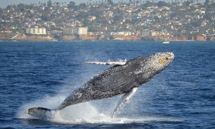 Pacific Nature Tours - Mission Bay Park: Full Day Whale Watching and Nature Tour for 1, 2, or 6 from Pacific Nature Tours (Up to 47% Off)